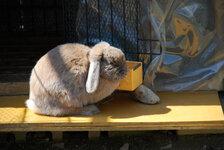 技術科実習棟横のウサギ舎