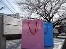 3/28桜