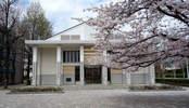 南加記念ホール前 桜