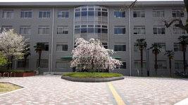 総合研究棟前の桜