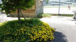 テニスコート前の花
