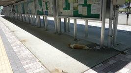 掲示板前でくつろぎすぎる猫