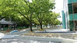法学部本館前~工学部1号館北まで工事中。 緑地化のようです。