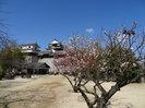 松山城本丸広場 梅(奥にヨシアキくん)