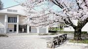 南加記念ホール前の桜(4/2)