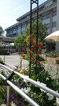 校友会館前 中庭の花壇 バラがキレイです。奥:共通教育講義棟