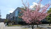 教育学部本館前の寒桜1