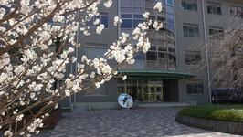 社会共創学部前,桜