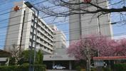 赤十字病院前の椿寒桜