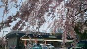 えみか前の桜(3/28)