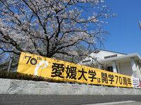 正門横の桜2