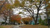 城北キャンパス紅葉'2019