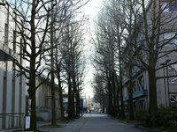枯れ木の季節です