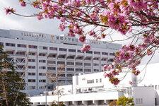 医学部附属病院 桜